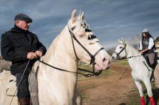 exposició races de cavalls Polinyà